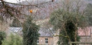 OrangeThrowing-5