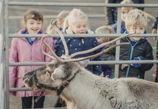 Reindeer2018-5