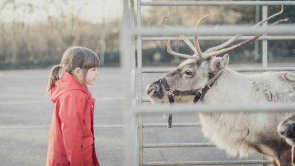Reindeer2018-7